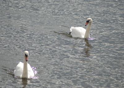 corrib river_claddagh6